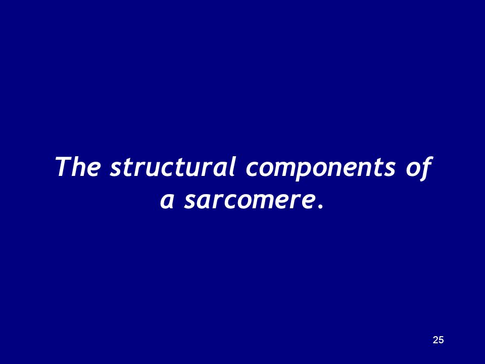 The structural components of a sarcomere.