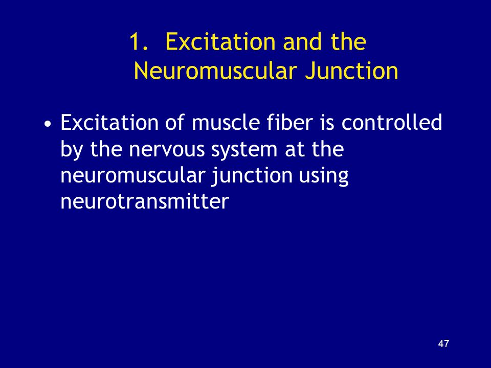 Excitation and the Neuromuscular Junction