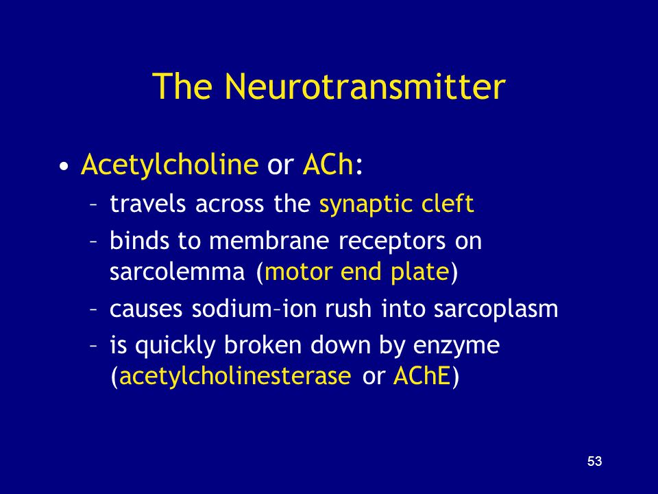 The Neurotransmitter Acetylcholine or ACh: