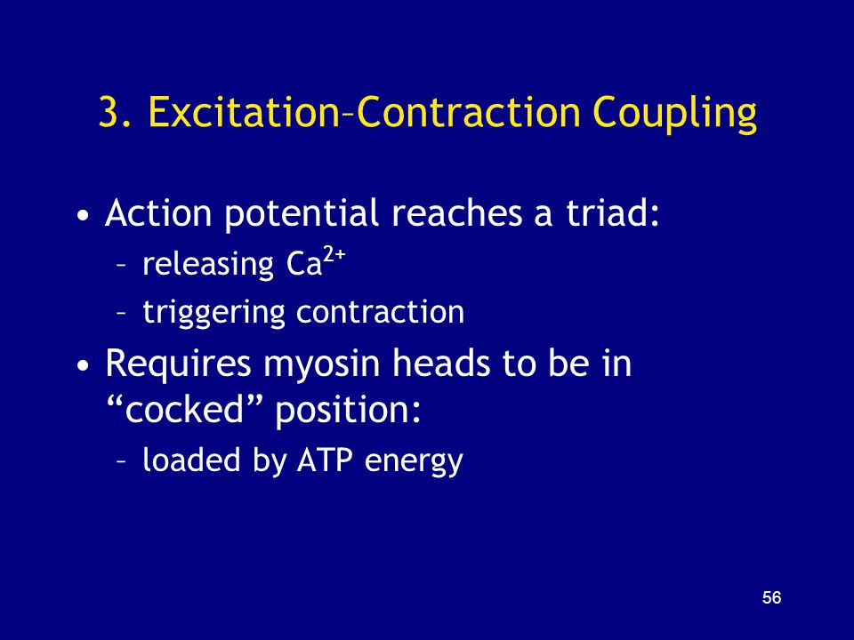3. Excitation–Contraction Coupling