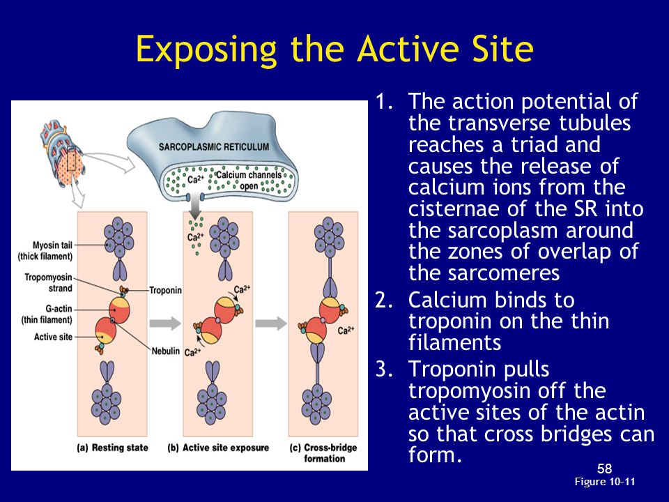 Exposing the Active Site