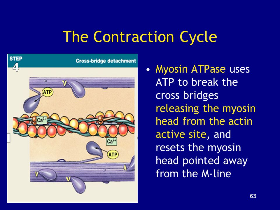 The Contraction Cycle