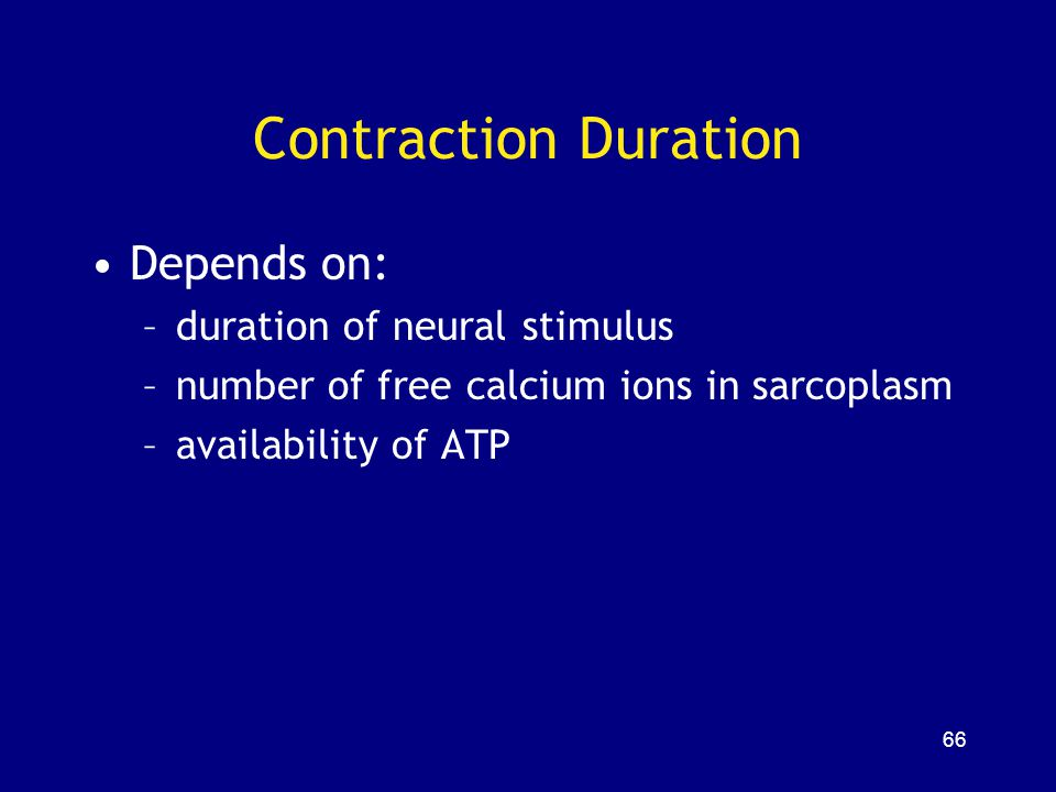 Contraction Duration Depends on: duration of neural stimulus