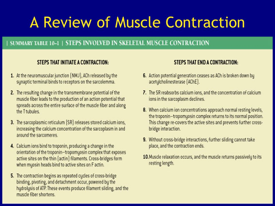 A Review of Muscle Contraction
