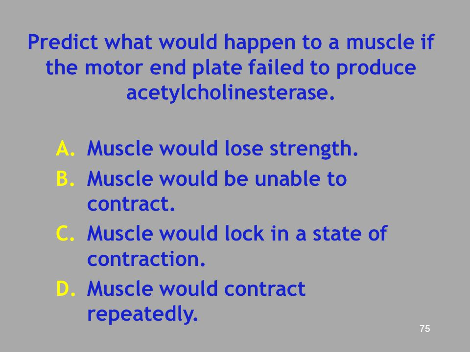 Predict what would happen to a muscle if the motor end plate failed to produce acetylcholinesterase.