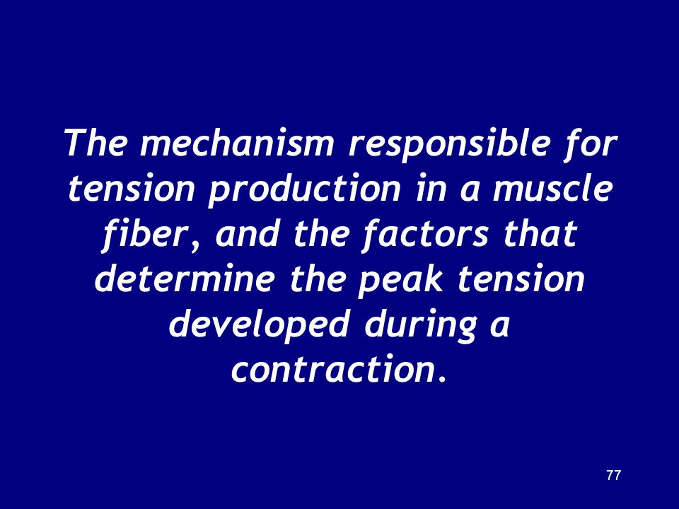 The mechanism responsible for tension production in a muscle fiber, and the factors that determine the peak tension developed during a contraction.