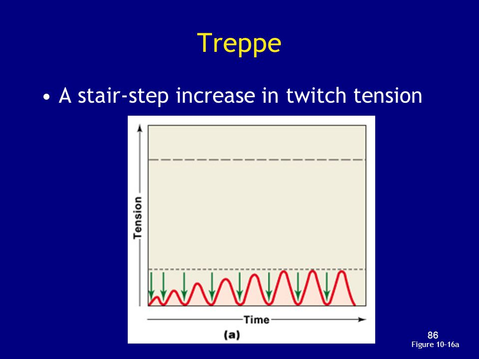 Treppe A stair-step increase in twitch tension Figure 10–16a
