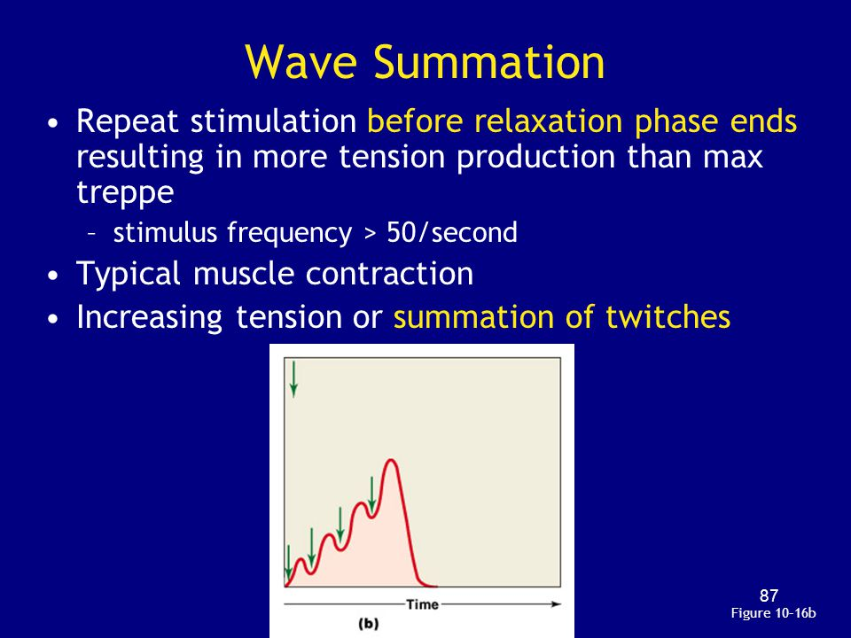 Wave Summation Repeat stimulation before relaxation phase ends resulting in more tension production than max treppe.