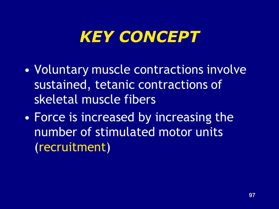 KEY CONCEPT Voluntary muscle contractions involve sustained, tetanic contractions of skeletal muscle fibers.