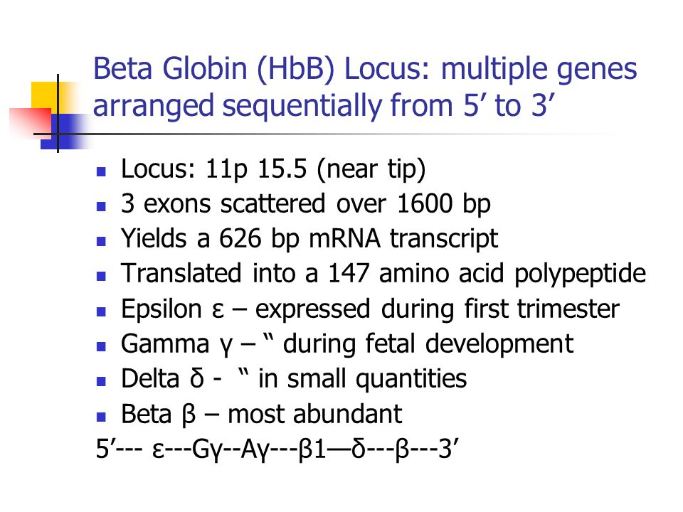 Beta Globin (HbB) Locus: multiple genes arranged sequentially from 5' to 3'