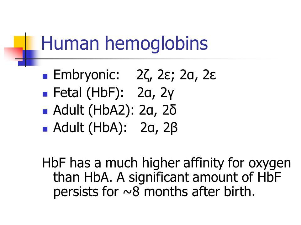 Human hemoglobins Embryonic: 2ζ, 2ε; 2α, 2ε Fetal (HbF): 2α, 2γ