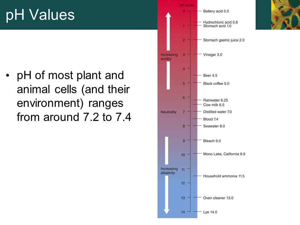 pH Values pH of most plant and animal cells (and their environment) ranges from around 7.2 to 7.4