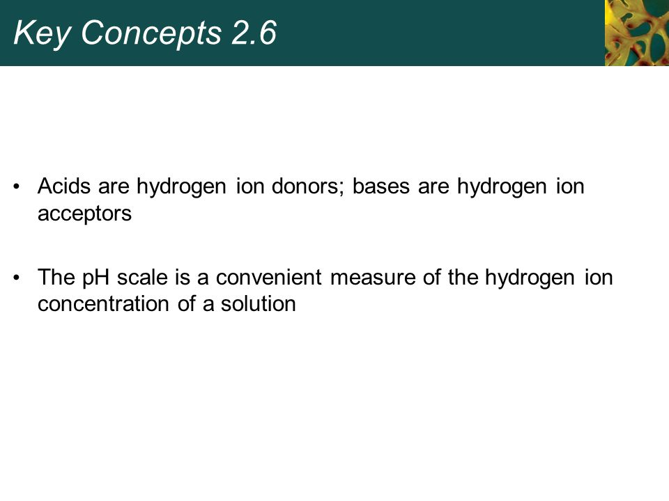 Key Concepts 2.6 Acids are hydrogen ion donors; bases are hydrogen ion acceptors.