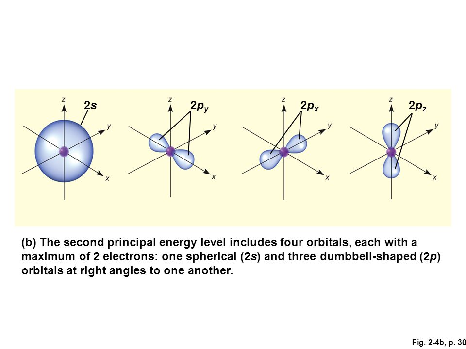 2s 2py. 2px. 2pz. Figure 2.4: Atomic orbitals.