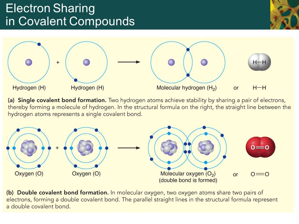 Electron Sharing in Covalent Compounds