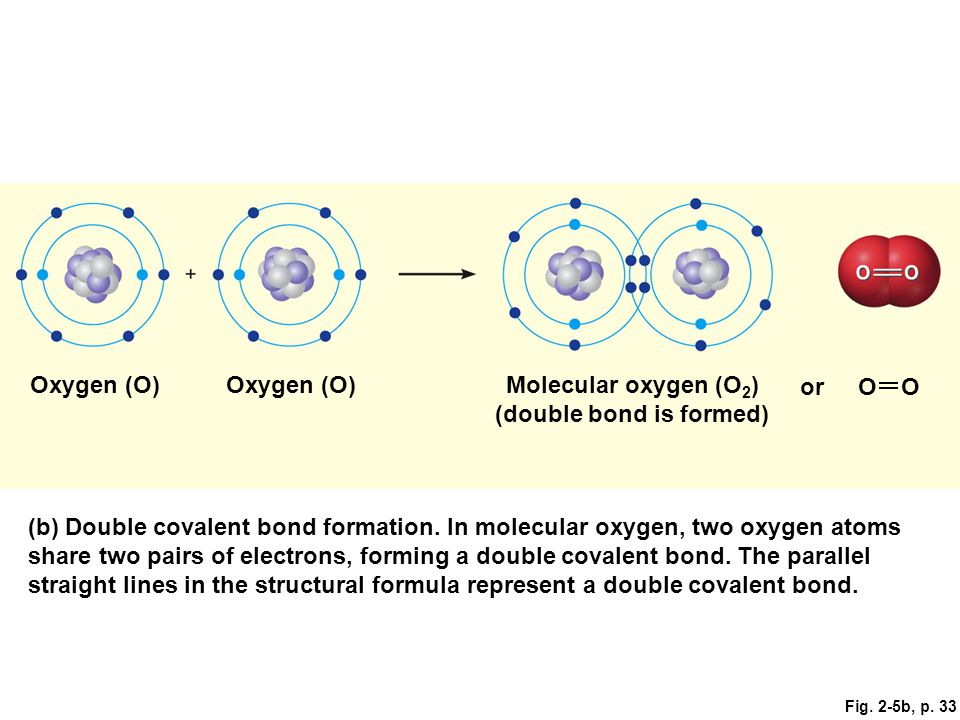 Molecular oxygen (O2) (double bond is formed)