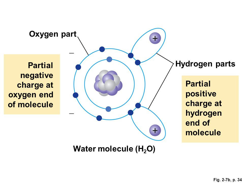 Partial negative charge at oxygen end of molecule