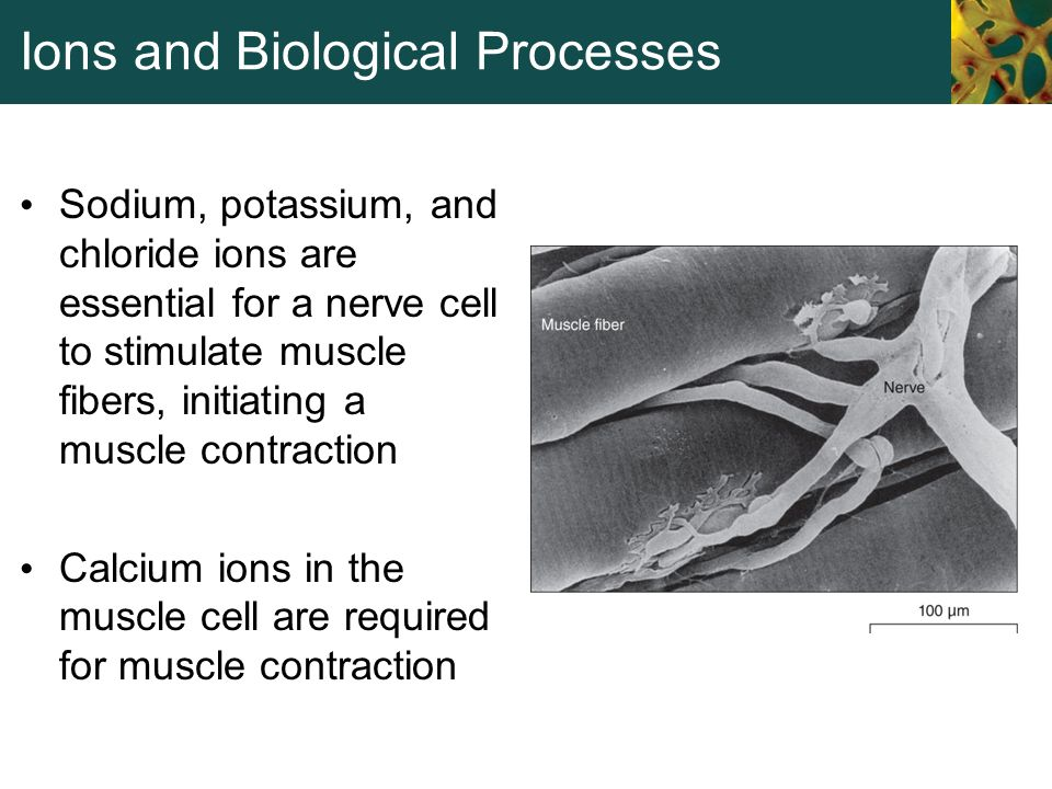 Ions and Biological Processes