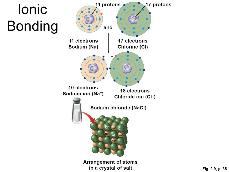 Ionic Bonding 11 protons 17 protons and 11 electrons Sodium (Na)