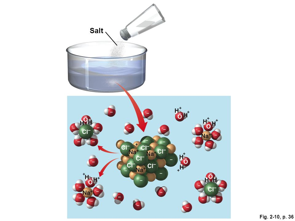 Salt Figure 2.10: Hydration of an ionic compound.