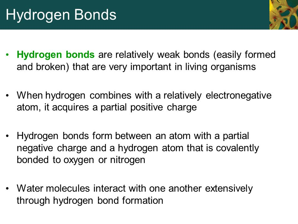 Hydrogen Bonds Hydrogen bonds are relatively weak bonds (easily formed and broken) that are very important in living organisms.