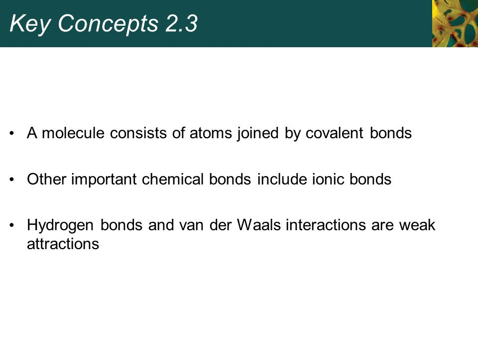 Key Concepts 2.3 A molecule consists of atoms joined by covalent bonds