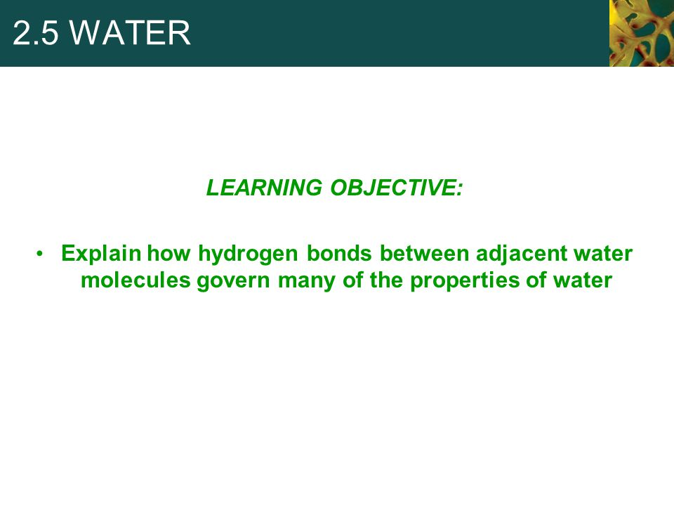 2.5 WATER LEARNING OBJECTIVE: