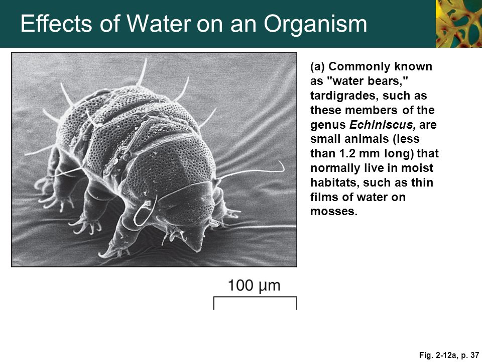 Effects of Water on an Organism