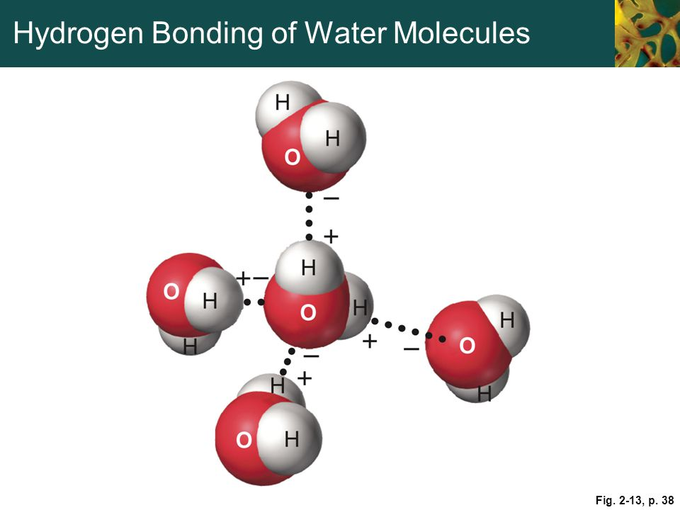 Hydrogen Bonding of Water Molecules