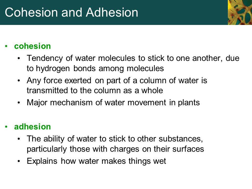 Cohesion and Adhesion cohesion