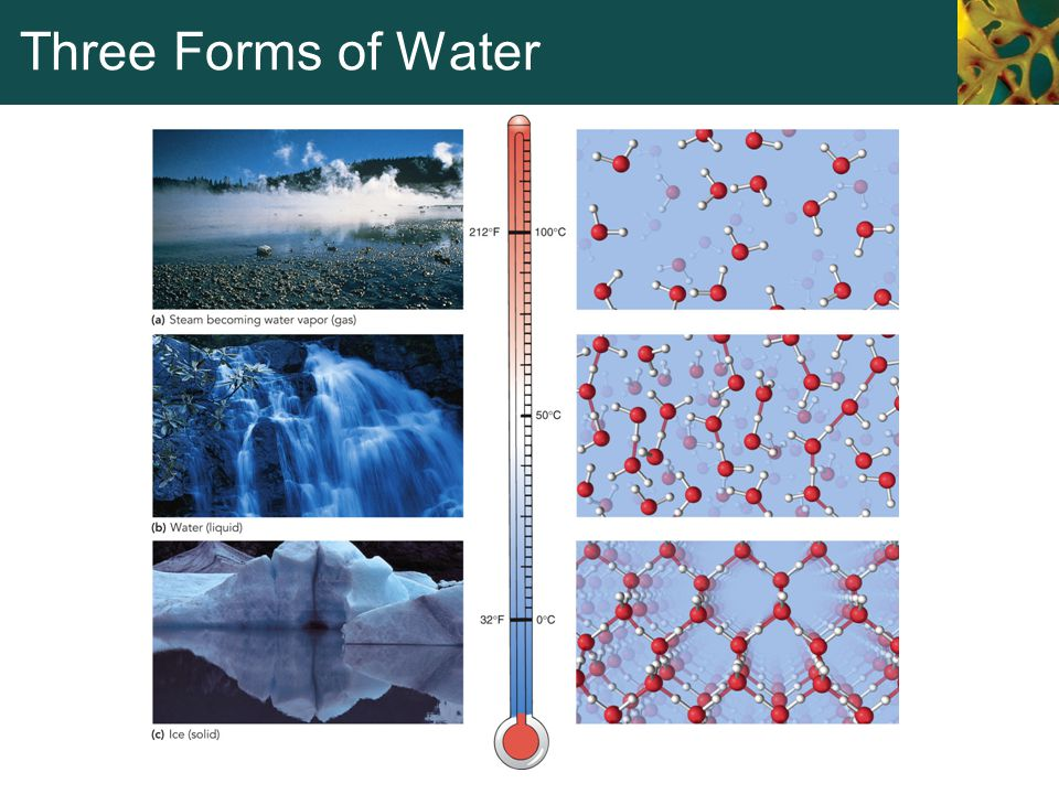 Three Forms of Water