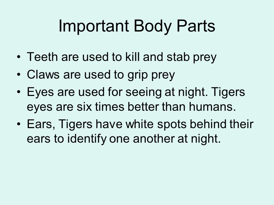 Important Body Parts Teeth are used to kill and stab prey