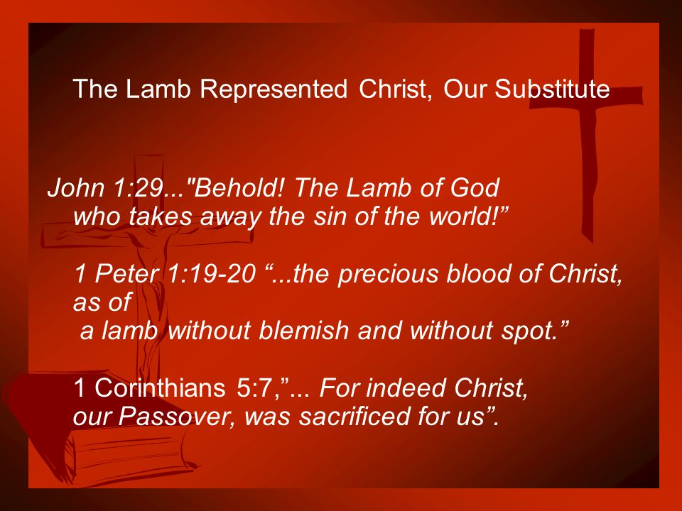 The Lamb Represented Christ, Our Substitute