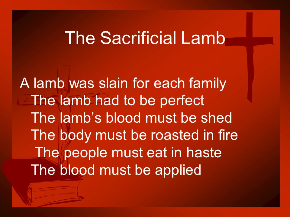 The Sacrificial Lamb