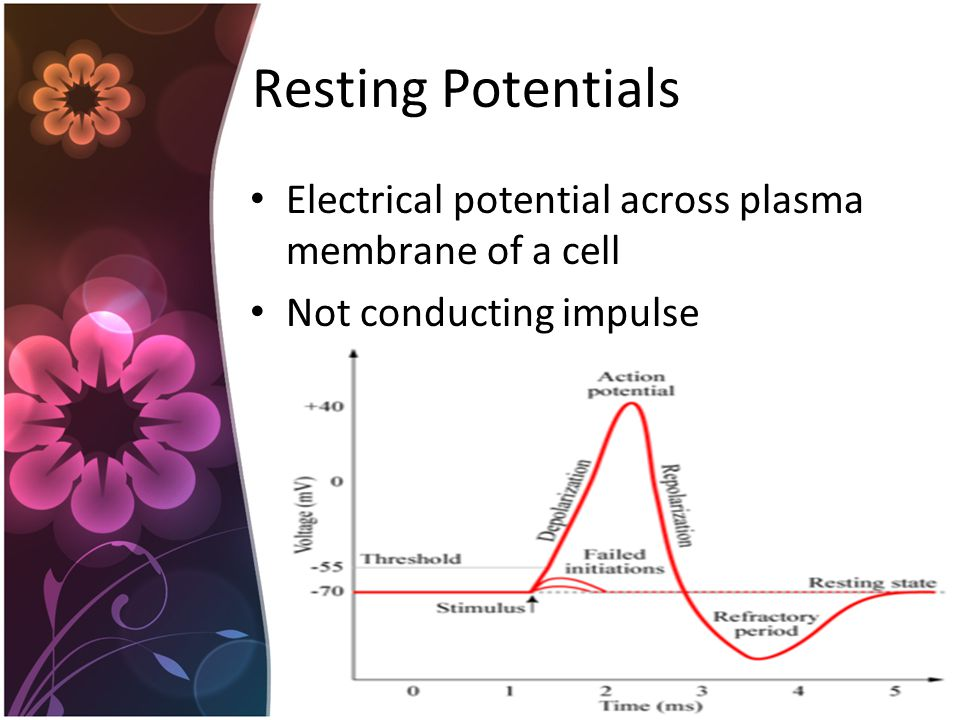 Resting Potentials Electrical potential across plasma membrane of a cell Not conducting impulse