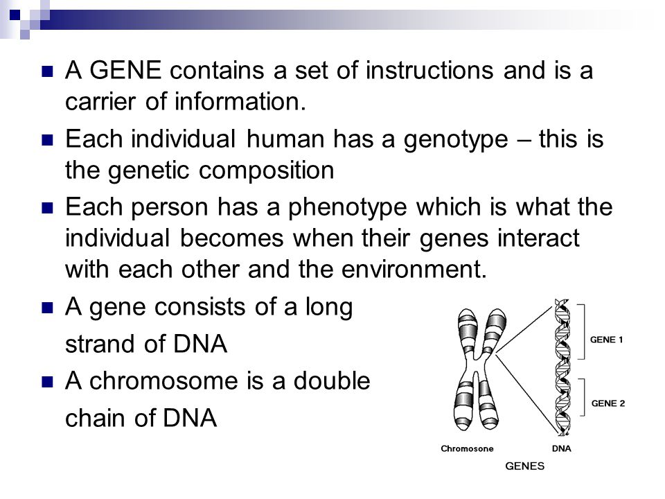 A GENE contains a set of instructions and is a carrier of information.
