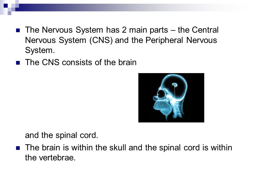 The Nervous System has 2 main parts – the Central Nervous System (CNS) and the Peripheral Nervous System.