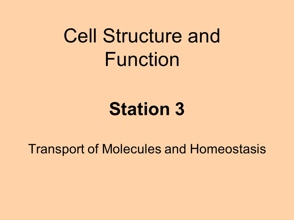 Transport of Molecules and Homeostasis