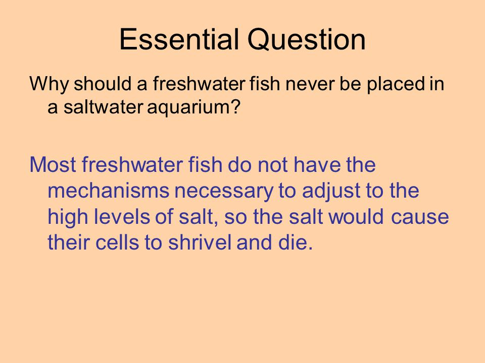 Essential Question Why should a freshwater fish never be placed in a saltwater aquarium
