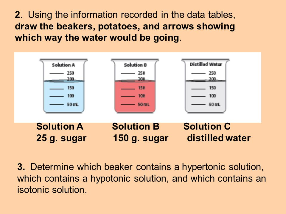 2. Using the information recorded in the data tables, draw the beakers, potatoes, and arrows showing which way the water would be going.