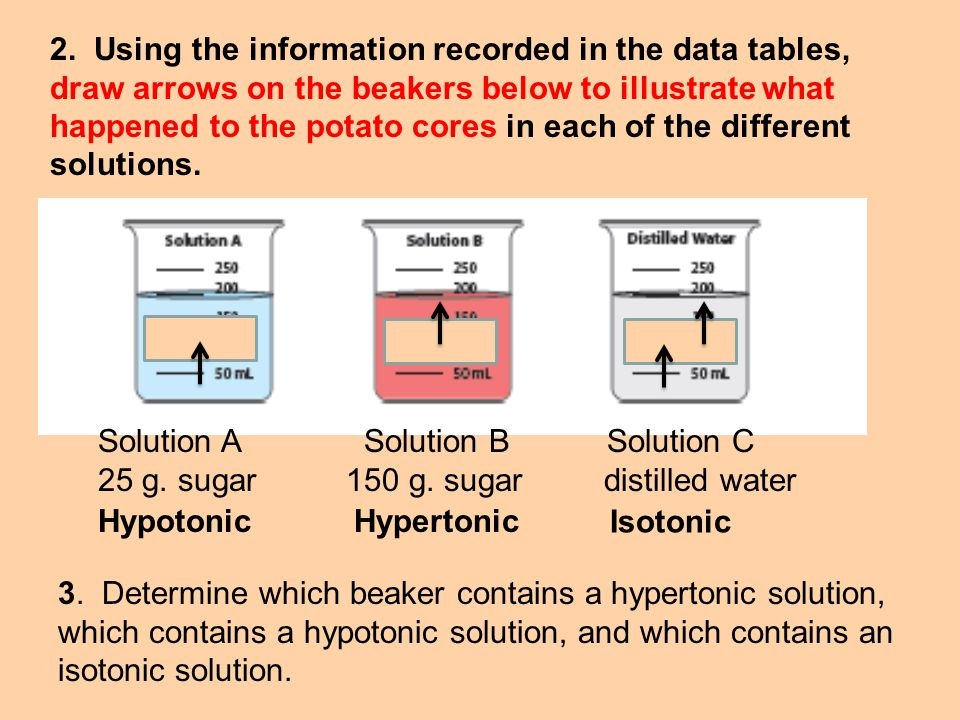 2. Using the information recorded in the data tables, draw arrows on the beakers below to illustrate what happened to the potato cores in each of the different solutions.