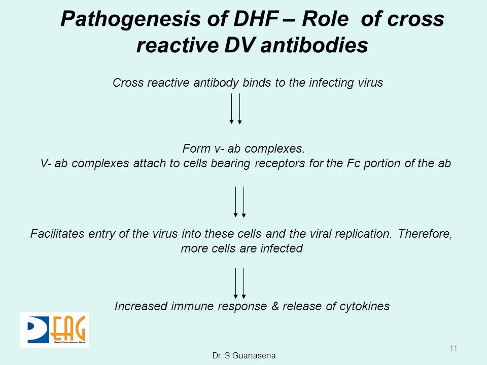 Pathogenesis of DHF – Role of cross reactive DV antibodies
