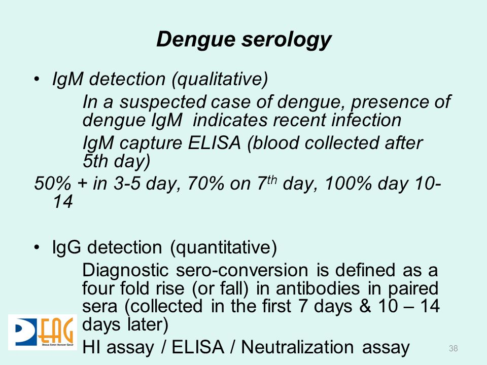 Dengue serology IgM detection (qualitative)