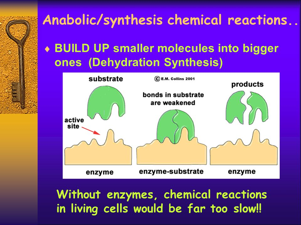 Anabolic/synthesis chemical reactions..