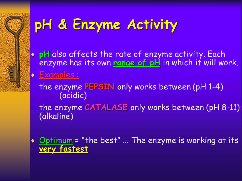 pH & Enzyme Activity pH also affects the rate of enzyme activity. Each enzyme has its own range of pH in which it will work.