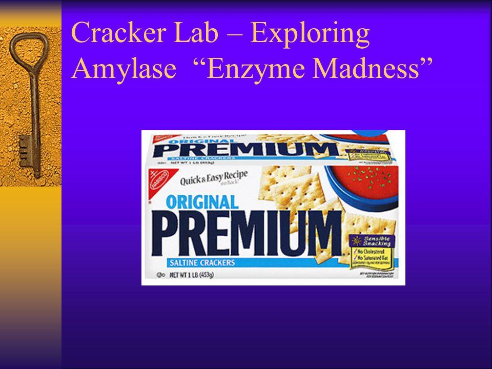 Cracker Lab – Exploring Amylase Enzyme Madness