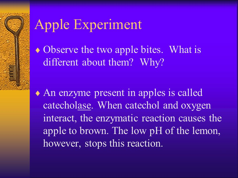 Apple Experiment Observe the two apple bites. What is different about them Why
