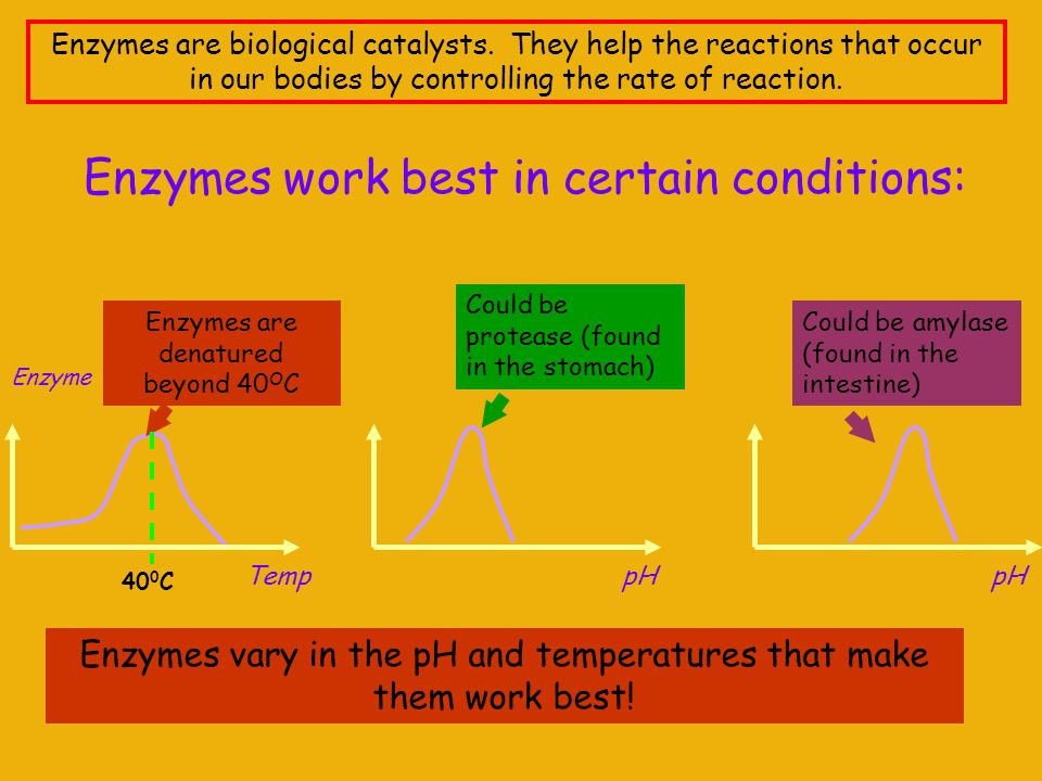 Enzymes work best in certain conditions: