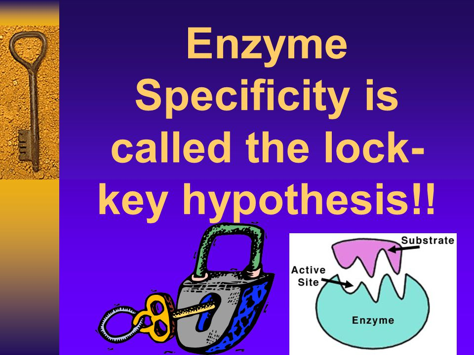 Enzyme Specificity is called the lock- key hypothesis!!