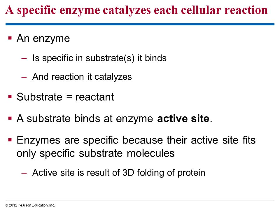 what is the relationship among starch glucose and enzymes